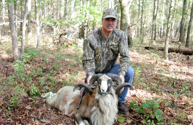 Corsican Ram hunting at Caryonah Hunting Lodge.