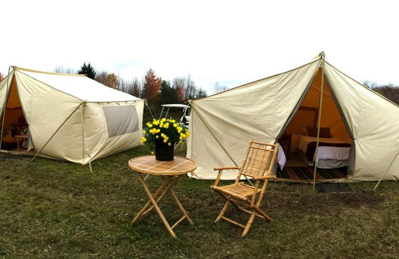 Tents at The Woods At Bear Creek Glamping Resort.