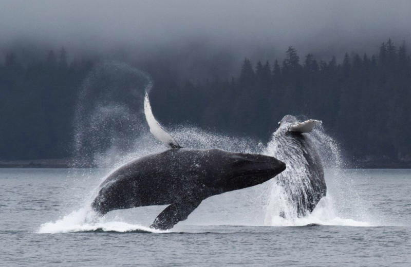 Whale watching at Favorite Bay Lodge.