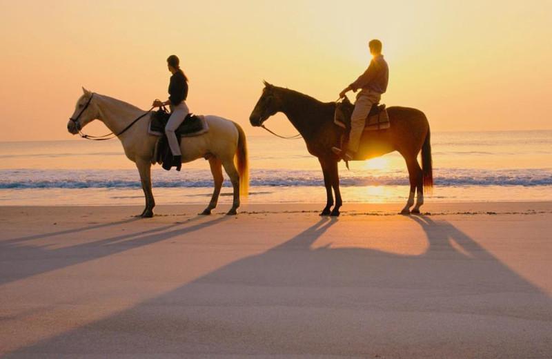 Beach horseback riding at Padre Getaways.