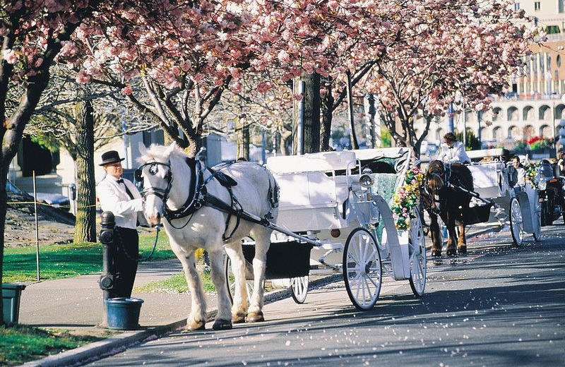 Carriage rides near Humboldt House Bed and Breakfast.