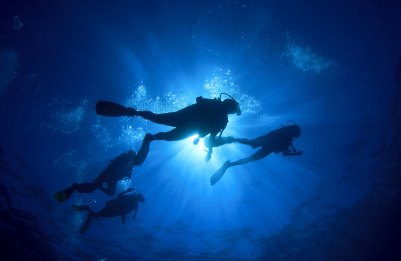 Diving near The South Winds.