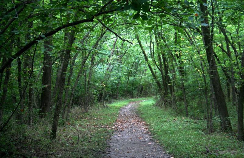 Hiking trail at The Woods At Bear Creek Glamping Resort.
