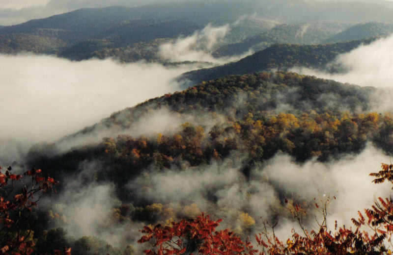 Enjoy the West Virginia's scenic forests and mountains by Cheats River Lodge.