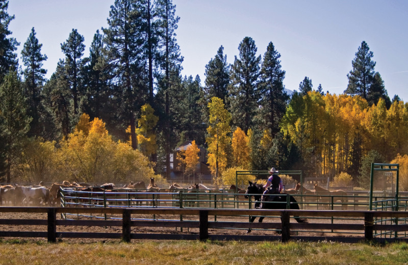 Ranch at Black Butte Ranch.