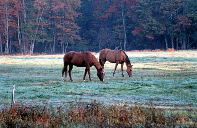 Horse Pasture at Malibu Dude Ranch
