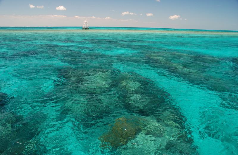 John Pennekamp Coral Reef State Park near Walker Vacation Rentals.