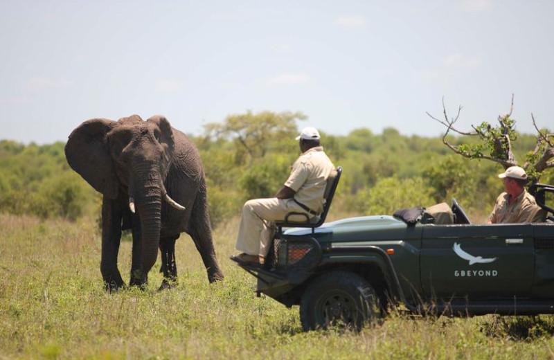Elephant safari at Ngala Game Lodge.
