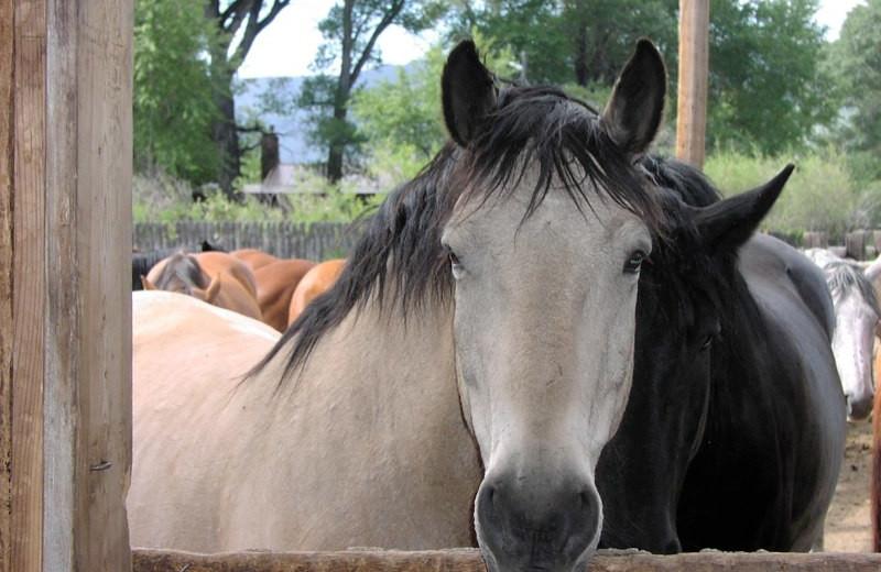 Horses at Vee Bar Guest Ranch.