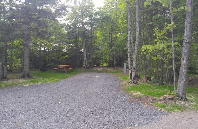 Grounds at Wilderness Resort Cabins
