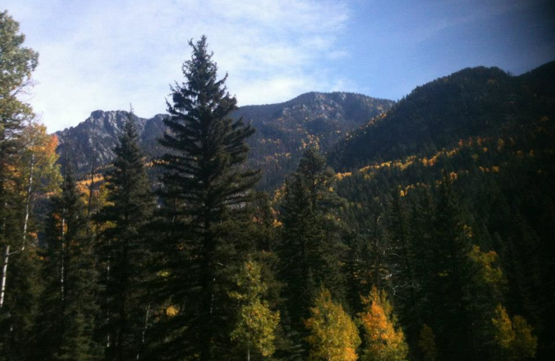 Mountains and trees at Lone Wolf Cabins and Getaway.