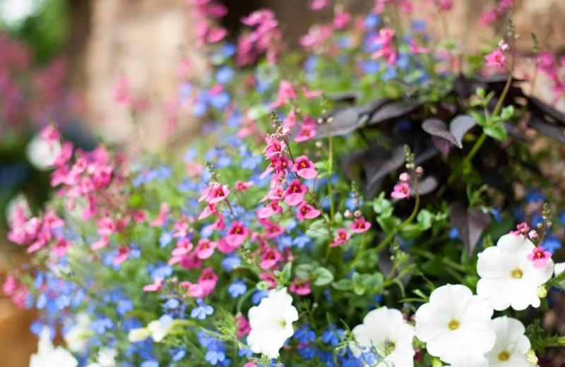 Garden at Obertal Inn.