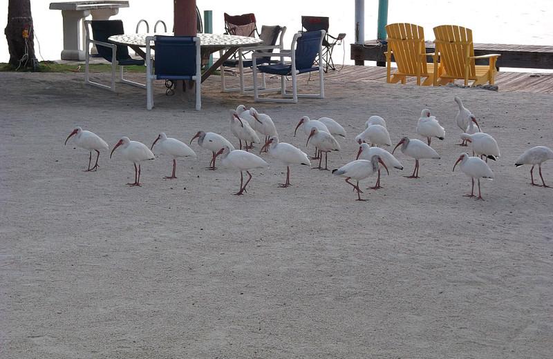 Birds at La Jolla Resort Hotel.