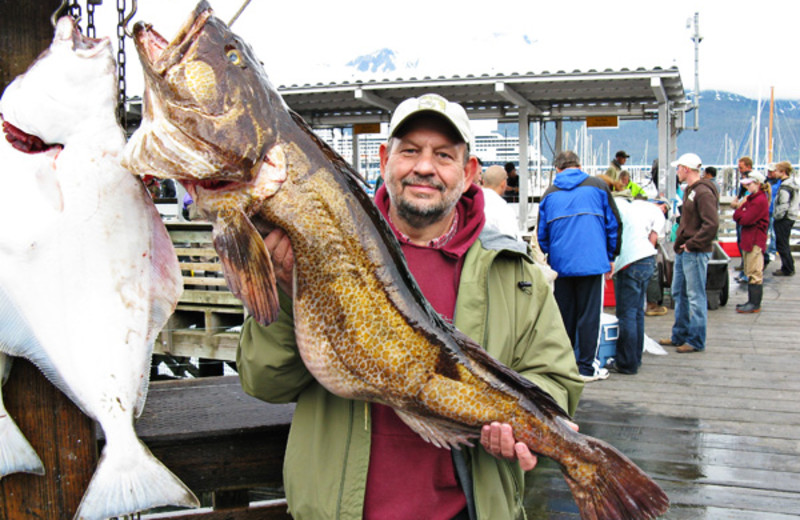 Alaskan ling cod fishing at Gone Fishin' Lodge.