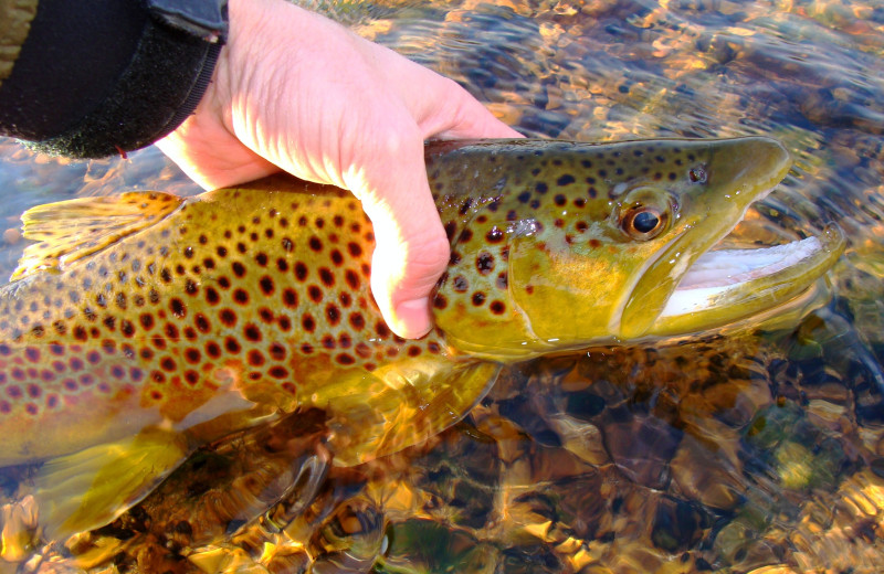 Fishing at Riverwood On Fall River.