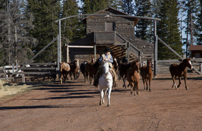Ranch activities at Latigo Ranch