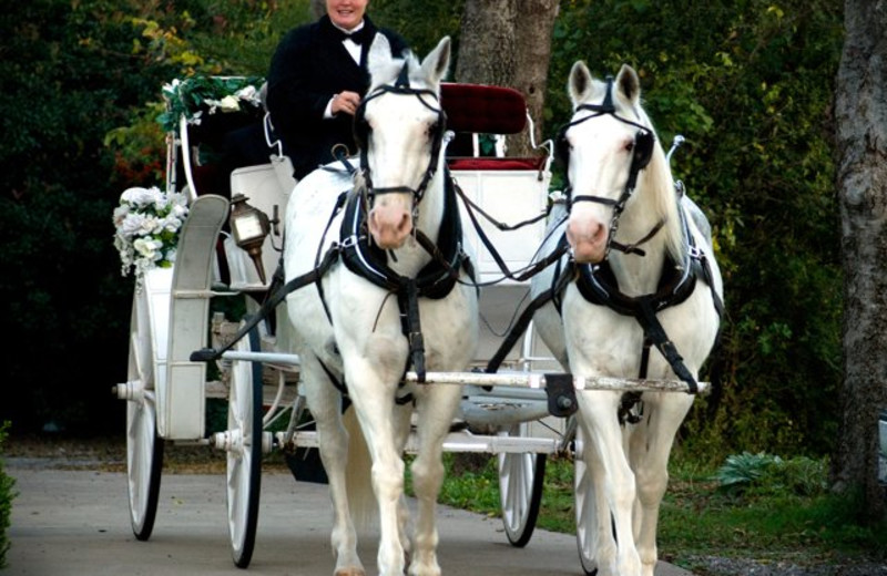 Carriage ride at Bingham House Bed & Breakfast.