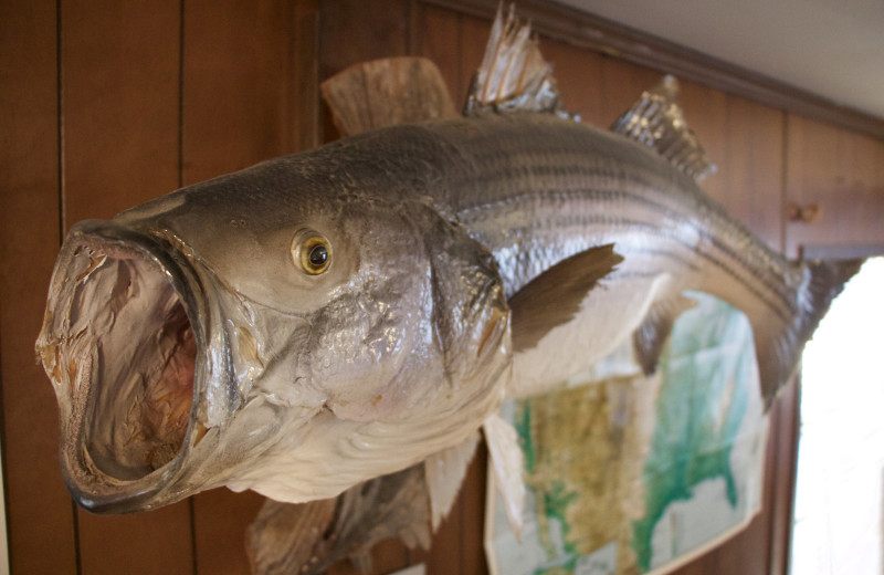Taxidermy fish at Tanglewood Lodge.