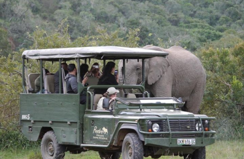 Day safaris at Hacklewood Hill Country House.