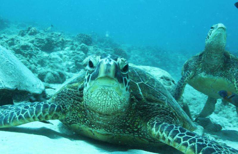Diving at Hawaiian Vacation Rentals.