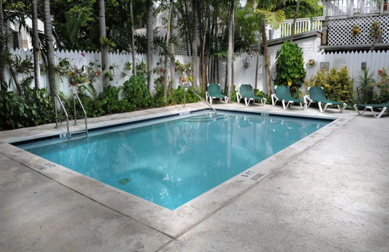 Outdoor pool at Coconut Grove Guest House.