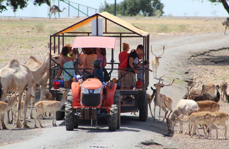 Tours at The Exotic Resort Zoo.