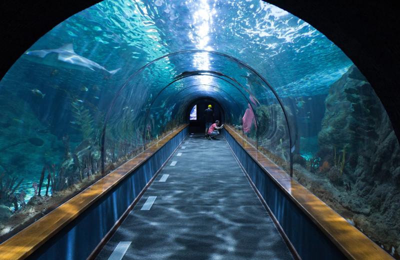 Aquarium near Old Creek Lodge.