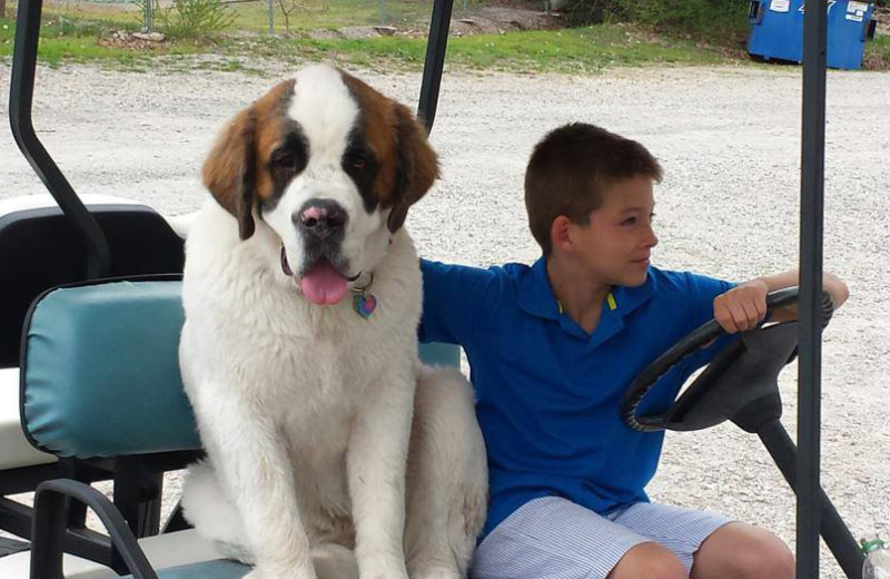Pet friendly accommodations at Lighthouse Lodge Resort.