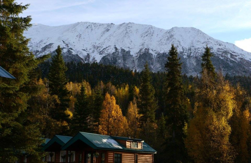 Cabins at Gwin's Lodge & Kenai Peninsula Charter Booking Service.