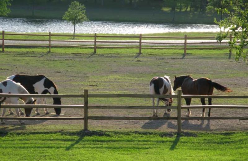 Animals at Stablewood Springs Resort