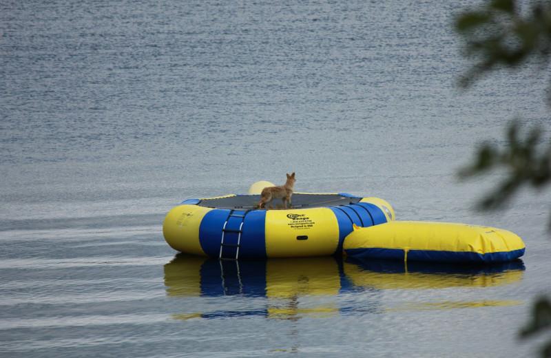 Local wildlife at Finn'n Feather Resort.