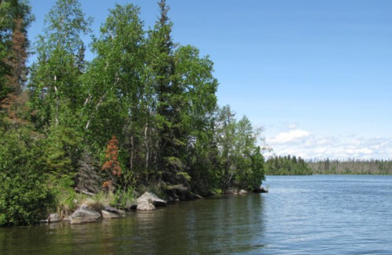 Boreal Forest at Lac La Ronge Lodge