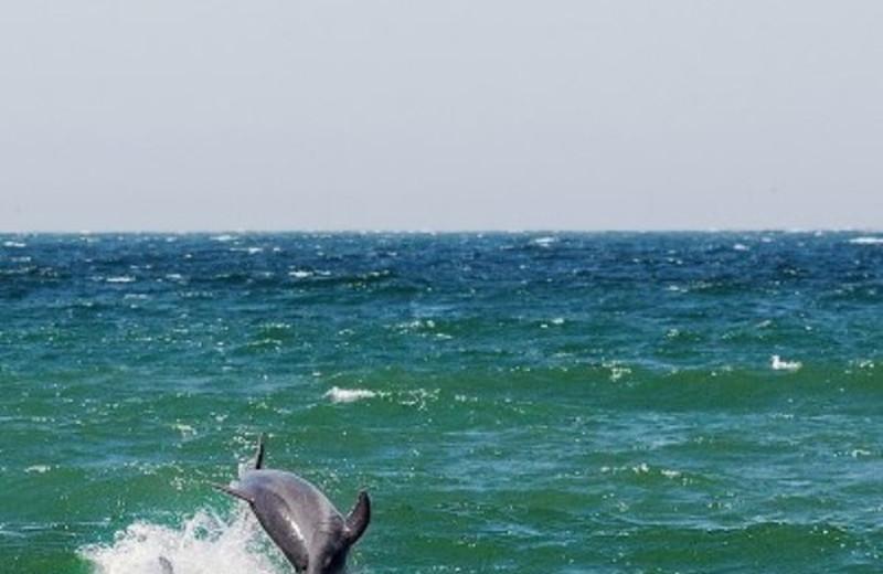 Dolphins near The Sanctuary Beach Resort