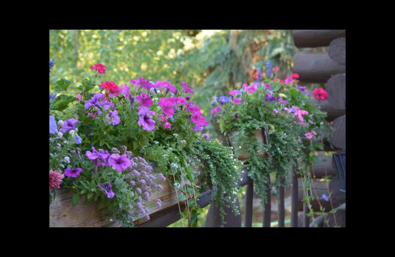 Garden at Rimrock Dude Ranch.