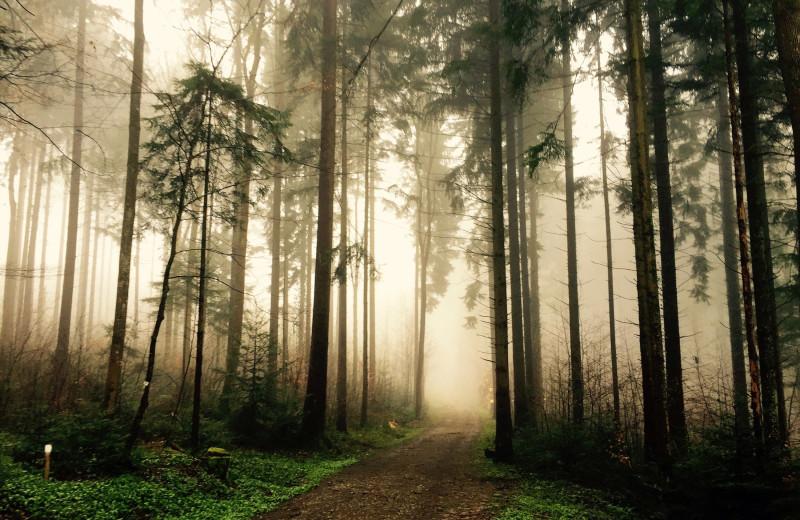 Forest near Aqua Breeze Inn.