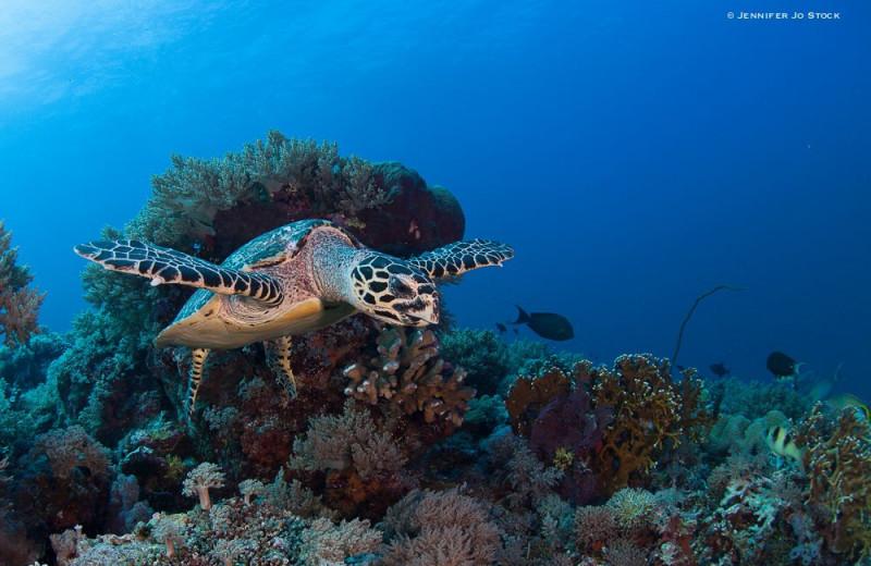 Diving at Atlantis Resort Hotel.