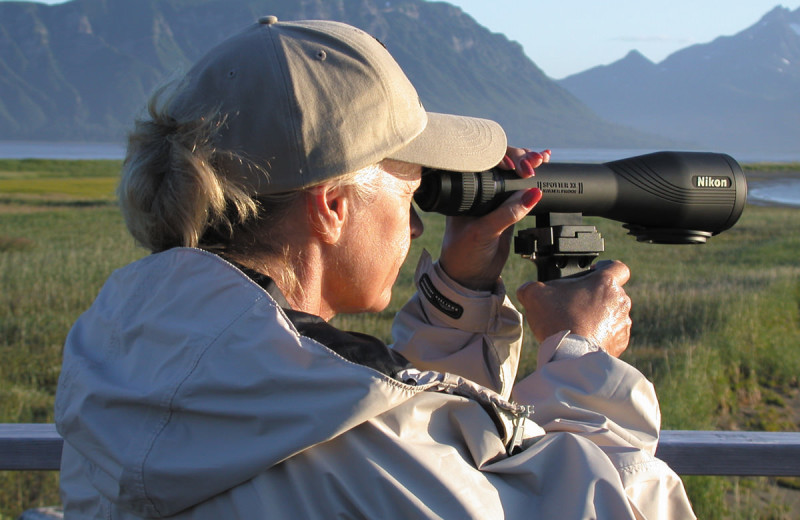 Wildlife viewing at Great Alaska Adventure Lodge.