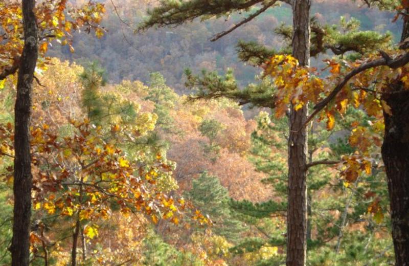 Fall colors at Pine Ridge Log Cabins.