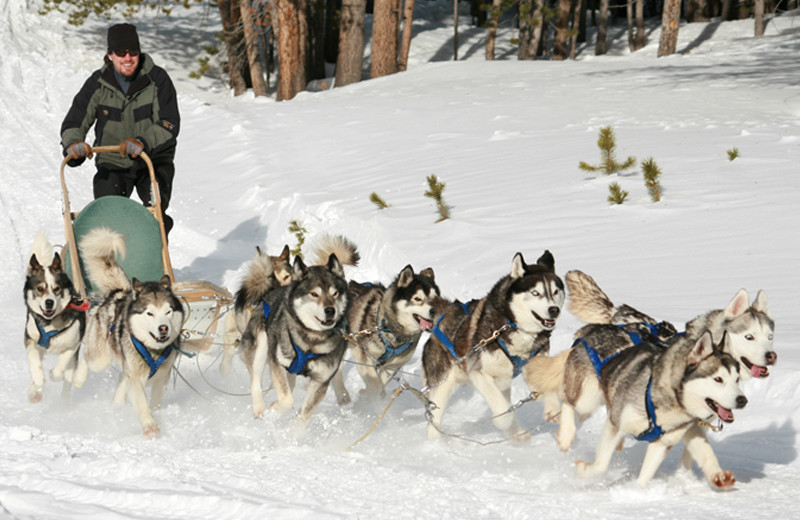Dog sledding at Beaver Run Resort & Conference Center.