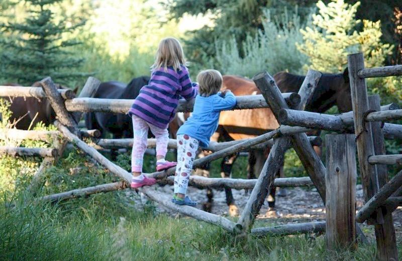 Visiting the Horses at Moose Head Ranch