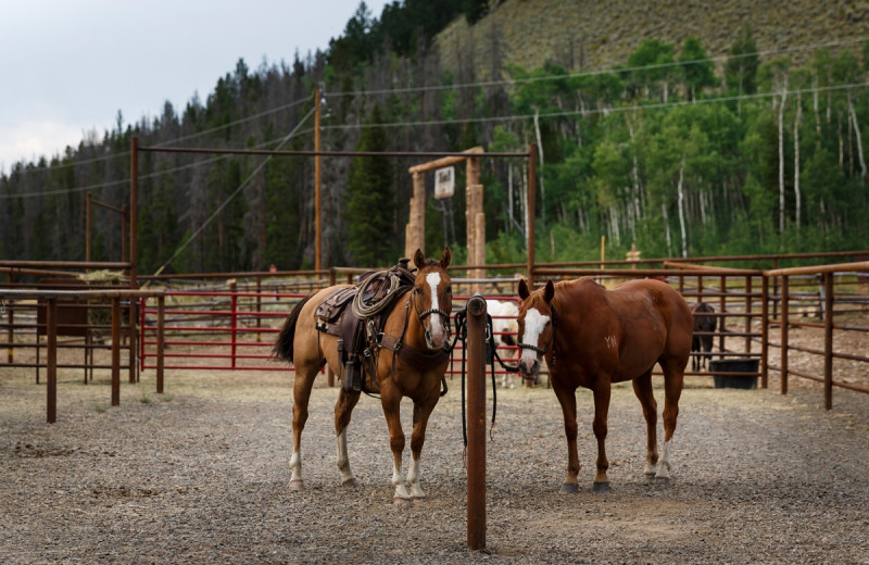 Horses at Rawah Ranch.
