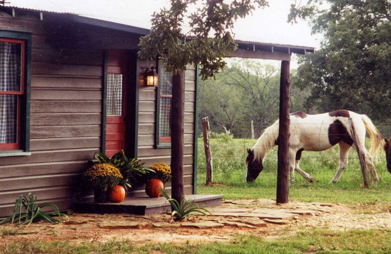 Exterior view of Texas Ranch Life.