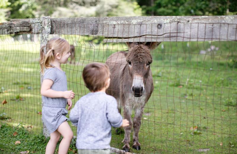Donkey at High Hampton Resort.