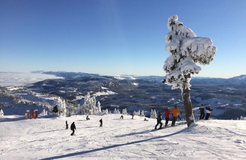 Ski near Ocean Trails Resort.