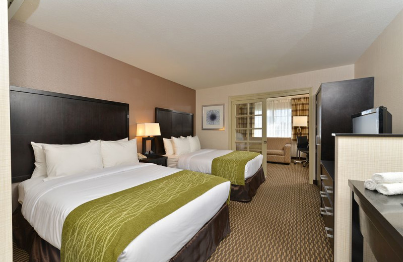 Guest room at Comfort Inn and Suites - Sea World and The Zoo.