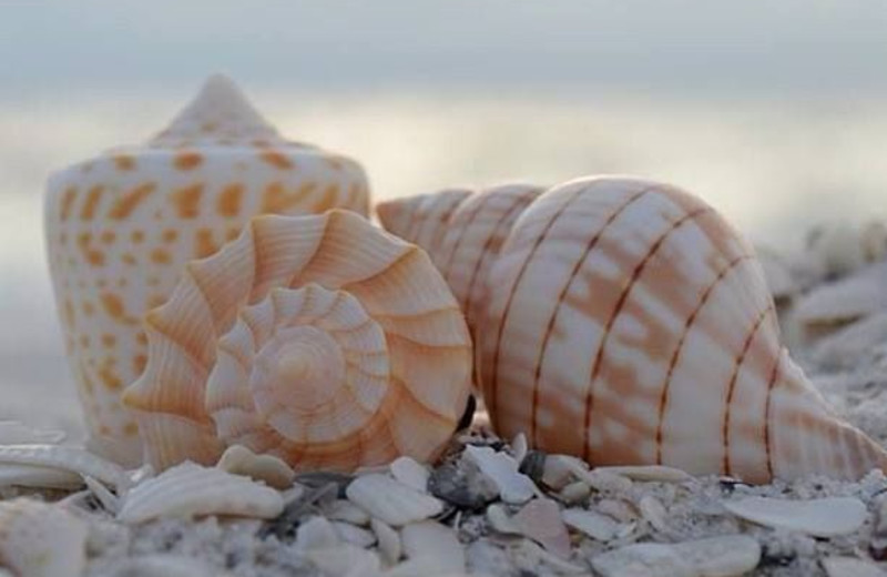 Sea shells at Casa Ybel Resort.