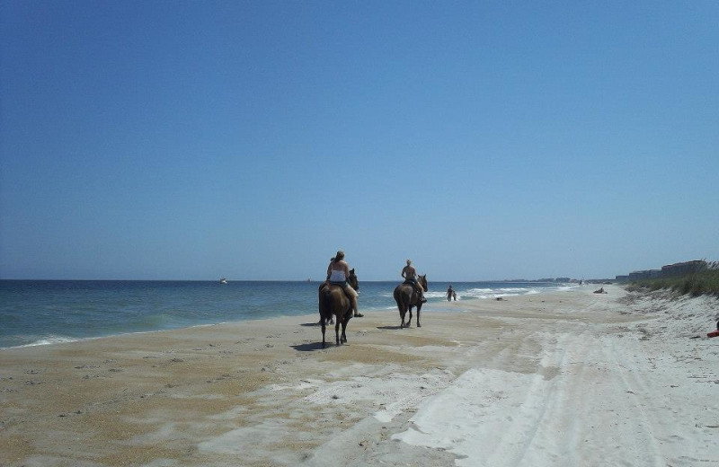 Horseback Riding at Amelia Oceanfront Bed & Breakfast