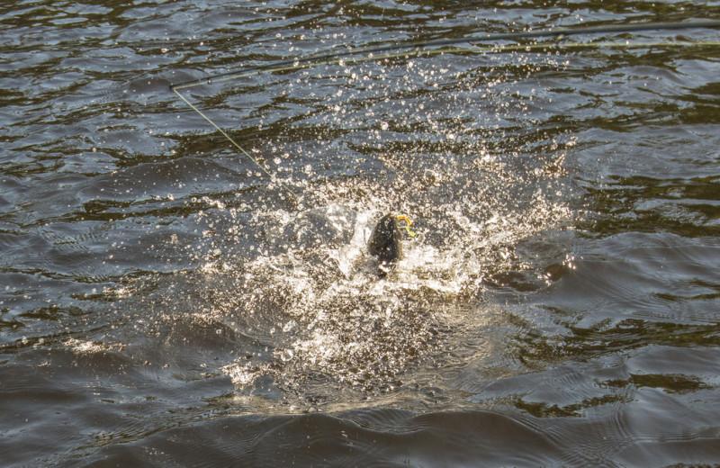 Catching a fish at Elk Lake Wilderness Resort.