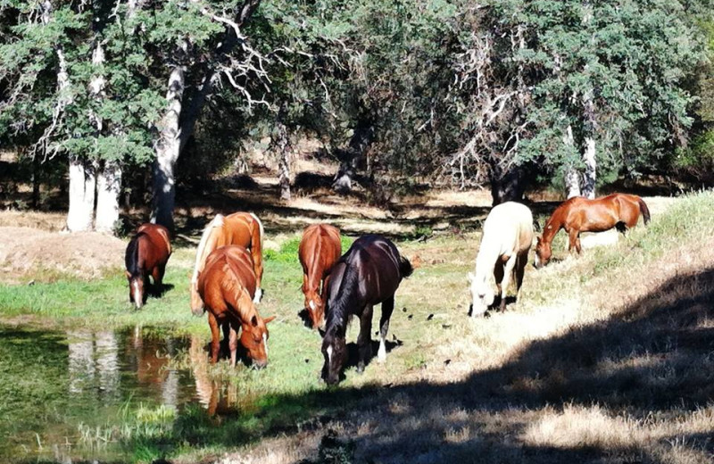 Horses at Yosemite Rose Bed & Breakfast.