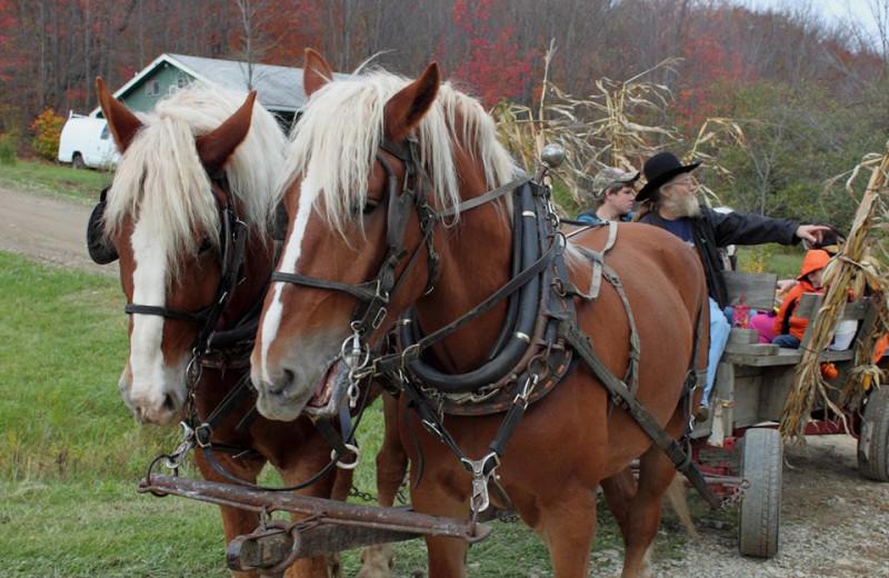 Horse ride at The Woods At Bear Creek Glamping Resort.